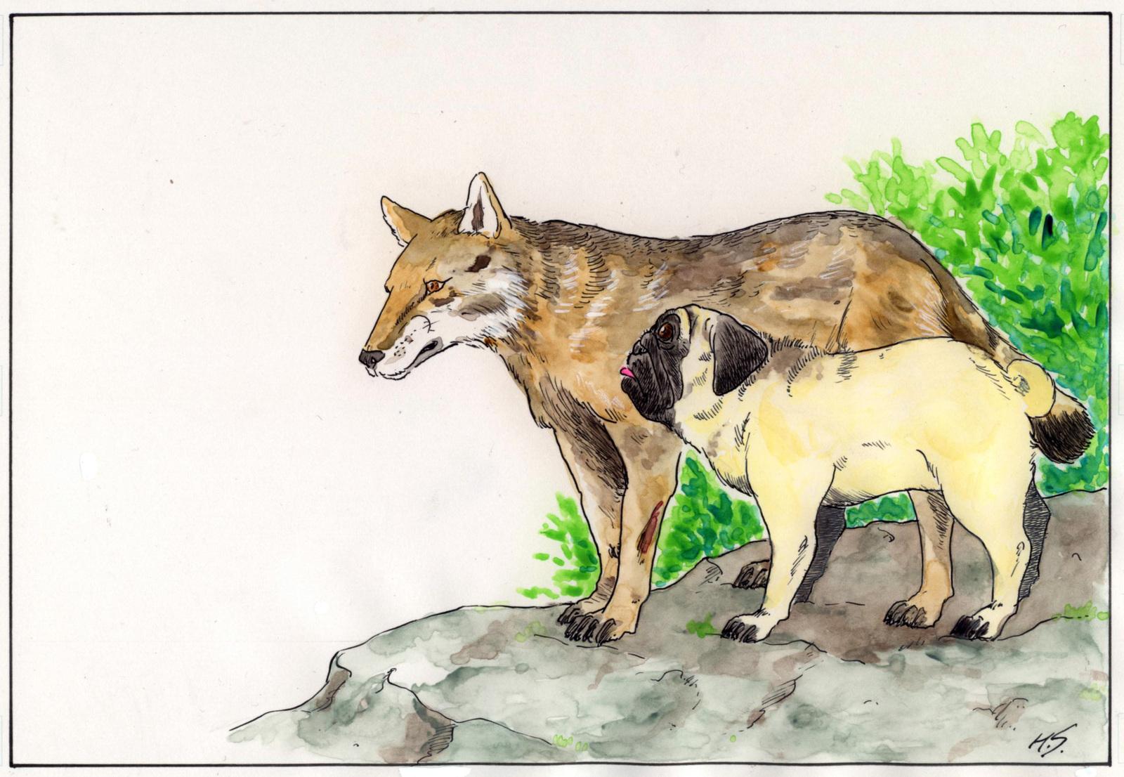 ニホンオオカミの画像 p1_35